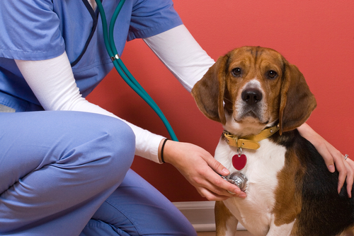 Are You Interested In Getting A Degree In Veterinary Technology? Here's What You Need To Know